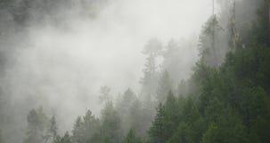 4k mountain mist rising in the morning,fog trees,Bomi County,tibet. 4k mountain mist rising in the morning,fog pine trees,such as wonderland.Bomi County in stock video