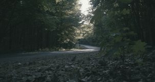 4K - movimento sopra la terra nel movimento lento magico della foresta di mattina video d archivio