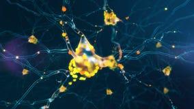 4K Neuronal Activity.