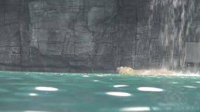 4k, niedźwiedzia polarnego puszek siklawa w zoo zdjęcie wideo