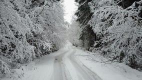 4K Niski lot nad wsi drogą w zamarzniętym zima lesie między gałąź widok z lotu ptaka zbiory
