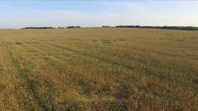 4K O voo e a decolagem acima da colheita colocam no por do sol, vista panorâmica aérea vídeos de arquivo