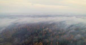 4K odgórny widok wiruje i podnosi w górę nad anteny jesieni mgłowego lasu i rzeki zbiory wideo