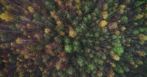 4K odgórny widok wiruje i podnosi w górę anteny jesieni lasu nad zbiory wideo
