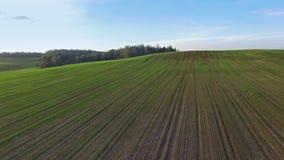 4K Ovannämnda gröna kullar och fält för flyg på solnedgången, flyg- sikt stock video