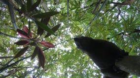 4K-pallas de eekhoorn die en voelt nieuwsgierig op tak van het bos van het bamboepark lopen stock videobeelden
