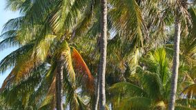 4k Palm trees stock footage