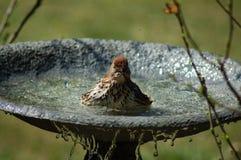 Kąpanie ptak Zdjęcia Royalty Free