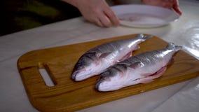 4K, pesce; alimento; cucina; animale; mano; uomo; bianco; sano; spigola; crudo; frutti di mare; stock footage
