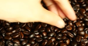 4k pick coffee bean by hand,drinks caffeine food material,delicious dishes bean. Gh2_08248_4k stock video