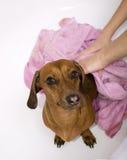 kąpielowy pies Zdjęcia Stock