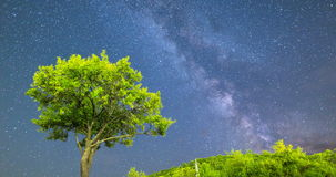 4k Plum tree Milky way night sky falling stars. Time lapse of a Meteor Shower and the Milky Way. Green plum tree with plums in the mountain as a foreground stock footage