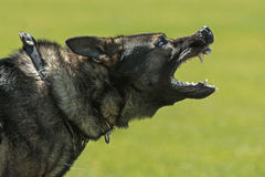 K9 Stock Images