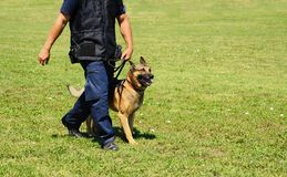 K9 police officer with his dog Royalty Free Stock Photography