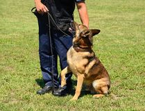 K9 police officer with his dog Royalty Free Stock Photo