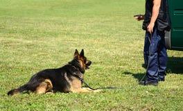 K9 politieman met zijn hond stock afbeeldingen