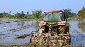 4K, primer del campo asiático del arroz de las paletas del trabajador usando agrimotor en campo almacen de metraje de vídeo