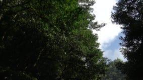 4K que conduce en el camino de la montaña a través de Forest With Turns en Asia metrajes