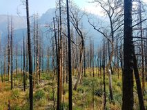 4k Rocky Mountain forest fire with flowers in the summer and lake. 4k Mountain glacier park fire forest with flowers and lake Royalty Free Stock Images