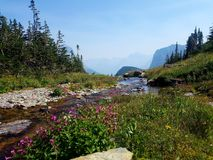 4k Rocky Mountain stream valley with glaciers in the summer. 4k Mountain glacier park green valley stream from glaciers with flowers Stock Photography