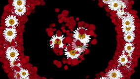 4k Rose petals daisy shaped wreath wedding Valentine`s Day background.  stock footage