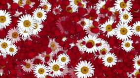 4k Rose petals daisy shaped wreath wedding Valentine`s Day background. 6780_4k stock video footage
