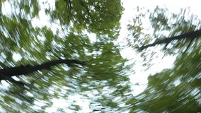 4K, Rotating Trees with blue sky, bottom view stock video footage