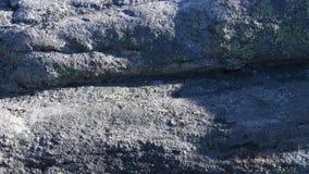 4K schuine stand onderaan Rots en Rododendron aan BIJ Uitbarsting stock videobeelden