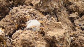 4K se cierran encima del trabajo en equipo del tiro de la hormiga que mueve encendido la tierra seca del país