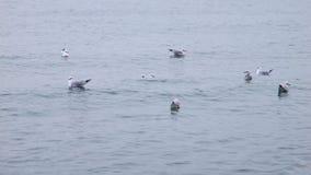 4K Seagulls seat on the sea. Seagulls seat on the Black Sea stock video footage