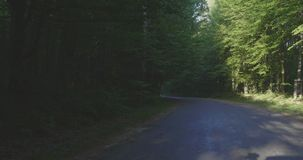 4K - Sentiero forestale che conduce in avanti video d archivio