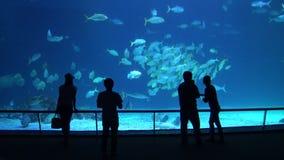 4k, Silhouettenmensen in de verbazende onderwaterwereld bij aquarium in Taiwan stock video