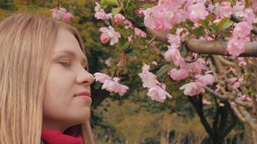 Close-up shot of attractive girl sniffs pink blossoms, woman enjoys smell of blossoming cherry flower blooms on branch. 4k slow motion close-up shot of stock footage