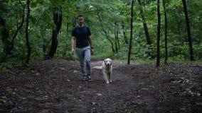 Golden Retriever Dog Stock Footage Image Of Lifestyles 63509554