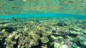 4k slow motion - surface of Red Sea with beautiful coral reef underwater. The action in the Egypt stock video