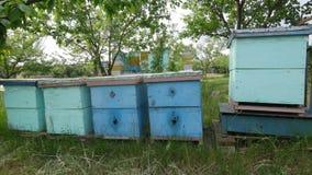 4K sluit omhoog geschoten van hoe de bijen ingaat en de blauwe bijenkorven verlaat stock videobeelden