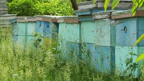 4K sluit omhoog spruit van bijenkorven in gras stock videobeelden