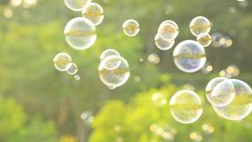 Soap bubbles floating in the air with natural green blurred bokeh background for children and kids in the park