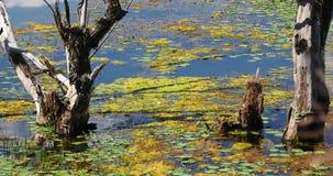 4k som vissnas i vatten, berg & moln, reflekterar på sjön, erhaien Dali, porslin arkivfilmer