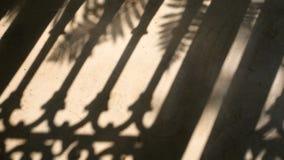 4K sombra de la silueta del movimiento de la cerca y de las hojas de palma por el viento natural en piso del cemento almacen de video
