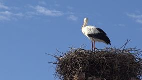 4K Stork on the nest over a column with blue sky at the town of Spain stock footage
