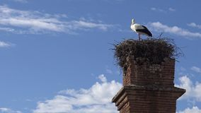 4K Stork on the nest over a column with blue sky at the town of Spain stock video footage