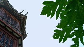 4K stort hus med japansk arkitektur, byggande whitträ stock video