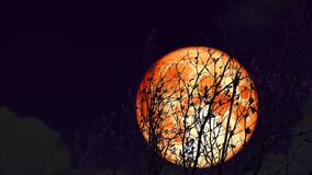 4k Super blood moon rise back on silhouette dry tree on night sky
