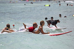K9 Surfer Royalty Free Stock Photo