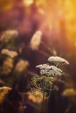 kąta pola trawy lato widok szeroki Obrazy Stock