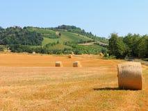 kąta pola trawy lato widok szeroki Obraz Royalty Free