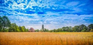 kąta pola trawy lato widok szeroki zdjęcie royalty free
