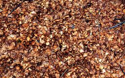 8K Textures of leaf brown colors. Close-up. Background royalty free stock photography