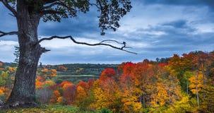4K Tijdschema van het najaarslandschap Kleurrijke bladeren in het herfstpark stock videobeelden
